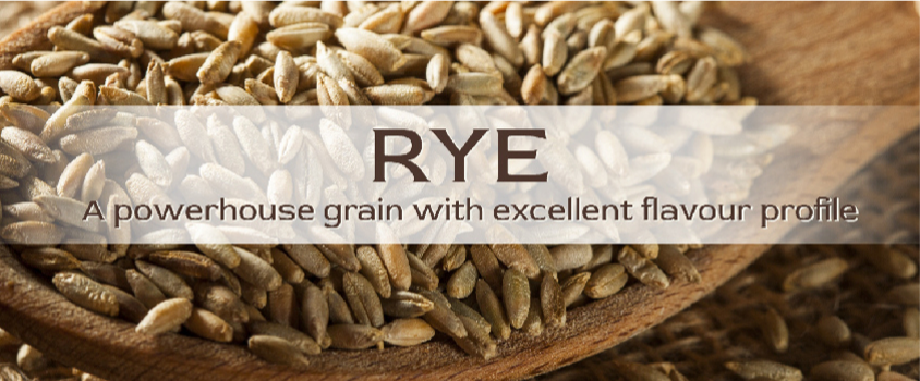 'Rye'-traditionally-cultivated-in-Europe-is-closely-related-to-wheat-and-barley.-Loaded-with-outstan